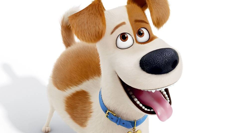 Courtesy: The Secret Life of Pets Facebook Page